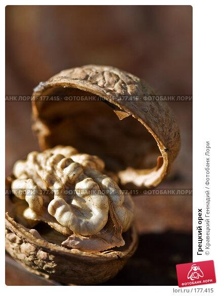 Грецкий орех, фото № 177415, снято 1 октября 2005 г. (c) Кравецкий Геннадий / Фотобанк Лори