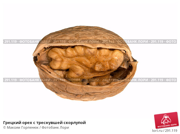 Грецкий орех с треснувшей скорлупой, фото № 291119, снято 20 августа 2017 г. (c) Максим Горпенюк / Фотобанк Лори