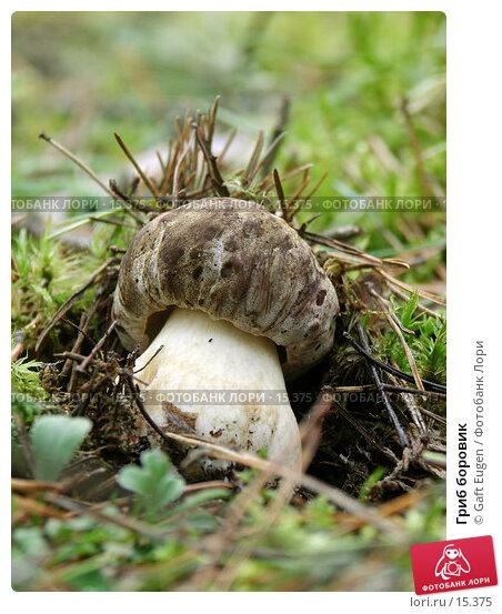 Купить «Гриб боровик », фото № 15375, снято 12 августа 2006 г. (c) Gaft Eugen / Фотобанк Лори