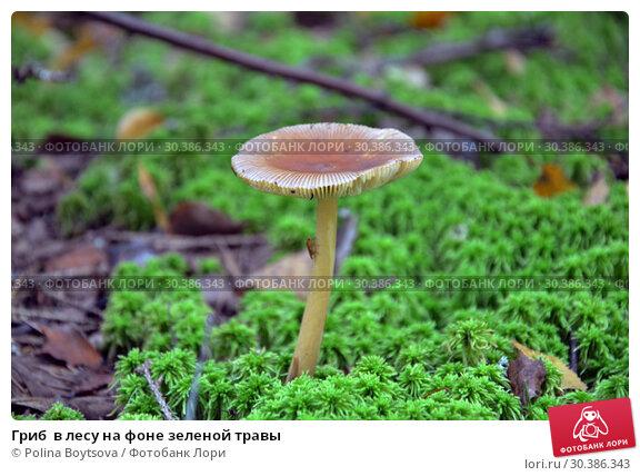 Купить «Гриб  в лесу на фоне зеленой травы», фото № 30386343, снято 18 августа 2018 г. (c) Polina Boytsova / Фотобанк Лори
