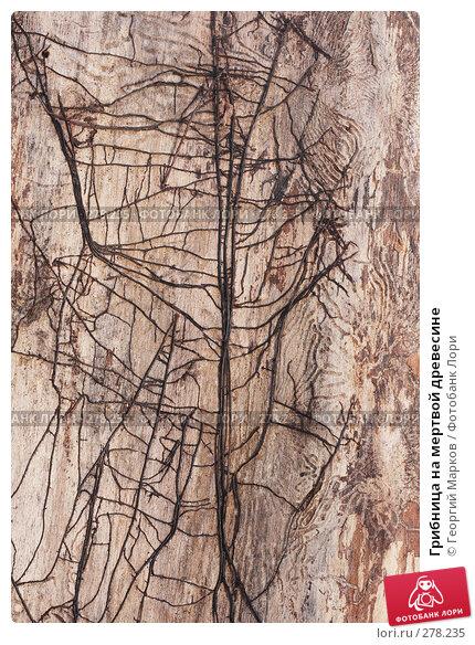 Грибница на мертвой древесине, фото № 278235, снято 15 апреля 2008 г. (c) Георгий Марков / Фотобанк Лори