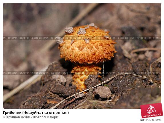 Грибочек (Чешуйчатка огненная), фото № 89891, снято 26 августа 2007 г. (c) Крупнов Денис / Фотобанк Лори
