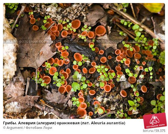 Грибы. Алеврия (алеурия) оранжевая (лат. Aleuria aurantia), фото № 59375, снято 23 июня 2007 г. (c) Argument / Фотобанк Лори