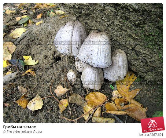 Купить «Грибы на земле», фото № 267691, снято 18 сентября 2005 г. (c) Fro / Фотобанк Лори