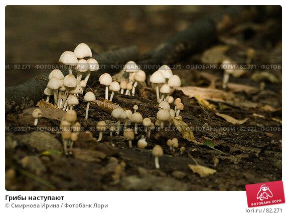 Грибы наступают, фото № 82271, снято 25 августа 2007 г. (c) Смирнова Ирина / Фотобанк Лори
