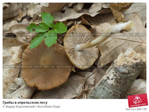 Грибы в апрельском лесу, фото № 250119, снято 12 апреля 2008 г. (c) Федор Королевский / Фотобанк Лори