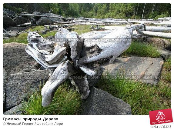 Гримасы природы. Дерево, фото № 6643, снято 8 июля 2006 г. (c) Николай Гернет / Фотобанк Лори