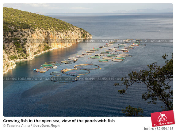 Growing fish in the open sea, view of the ponds with fish. Стоковое фото, фотограф Татьяна Ляпи / Фотобанк Лори