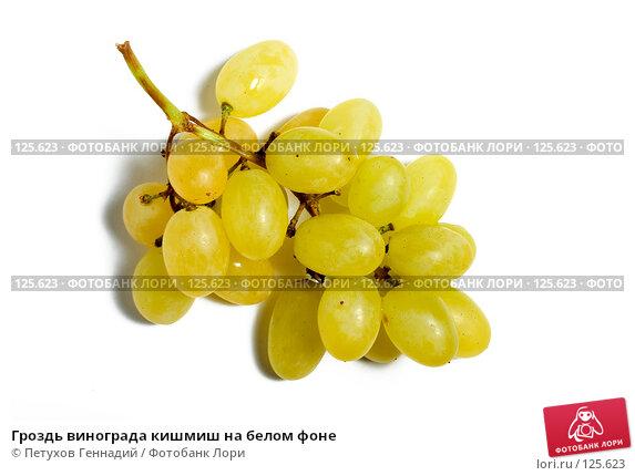 Купить «Гроздь винограда кишмиш на белом фоне», фото № 125623, снято 5 ноября 2007 г. (c) Петухов Геннадий / Фотобанк Лори