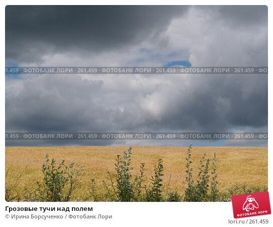 Грозовые тучи над полем, фото № 261459, снято 20 июня 2007 г. (c) Ирина Борсученко / Фотобанк Лори