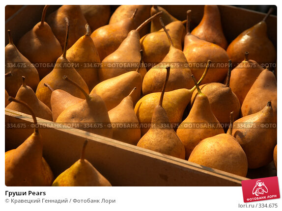 Купить «Груши Pears», фото № 334675, снято 18 сентября 2004 г. (c) Кравецкий Геннадий / Фотобанк Лори