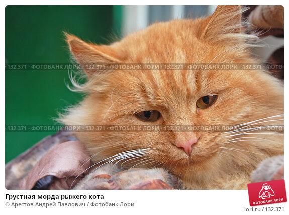 Грустная морда рыжего кота, фото № 132371, снято 5 ноября 2007 г. (c) Арестов Андрей Павлович / Фотобанк Лори
