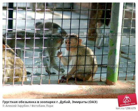 Грустная обезьянка в зоопарке г. Дубай, Эмираты (ОАЭ), фото № 298679, снято 16 ноября 2007 г. (c) Алексей Зарубин / Фотобанк Лори