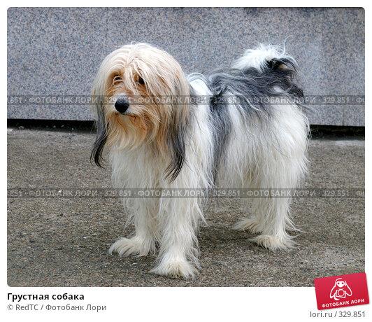 Грустная собака, фото № 329851, снято 19 июня 2008 г. (c) RedTC / Фотобанк Лори