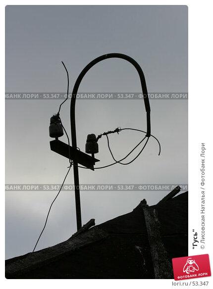 """""""Гусь"""", фото № 53347, снято 30 апреля 2005 г. (c) Лисовская Наталья / Фотобанк Лори"""