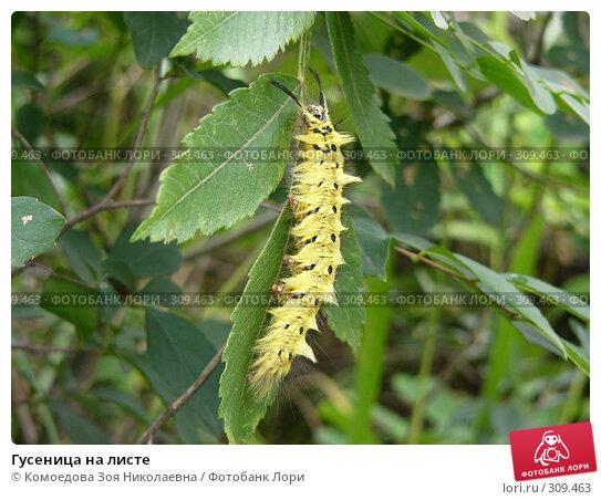 Купить «Гусеница на листе», фото № 309463, снято 11 июля 2004 г. (c) Комоедова Зоя Николаевна / Фотобанк Лори