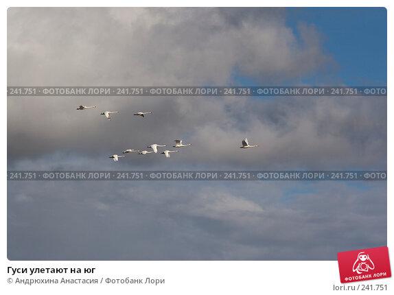 Гуси улетают на юг, фото № 241751, снято 16 сентября 2007 г. (c) Андрюхина Анастасия / Фотобанк Лори