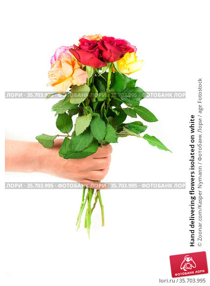 Hand delivering flowers isolated on white. Стоковое фото, фотограф Zoonar.com/Kasper Nymann / age Fotostock / Фотобанк Лори