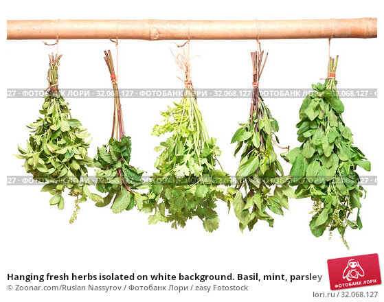 Hanging fresh herbs isolated on white background. Basil, mint, parsley. Стоковое фото, фотограф Zoonar.com/Ruslan Nassyrov / easy Fotostock / Фотобанк Лори