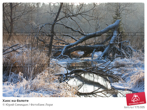 Хаос на болоте, фото № 173935, снято 8 января 2008 г. (c) Юрий Синицын / Фотобанк Лори