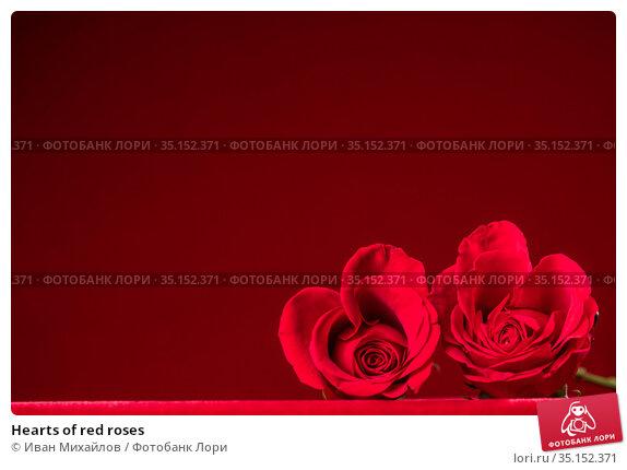 Hearts of red roses. Стоковое фото, фотограф Иван Михайлов / Фотобанк Лори