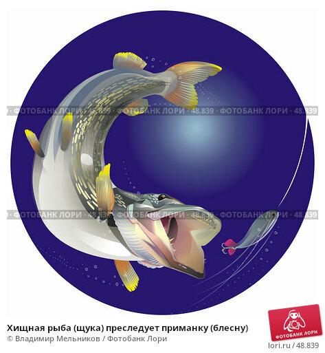 Хищная рыба (щука) преследует приманку (блесну), иллюстрация № 48839 (c) Владимир Мельников / Фотобанк Лори