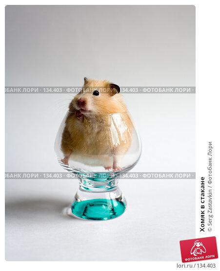 Хомяк в стакане, фото № 134403, снято 14 мая 2006 г. (c) Serg Zastavkin / Фотобанк Лори