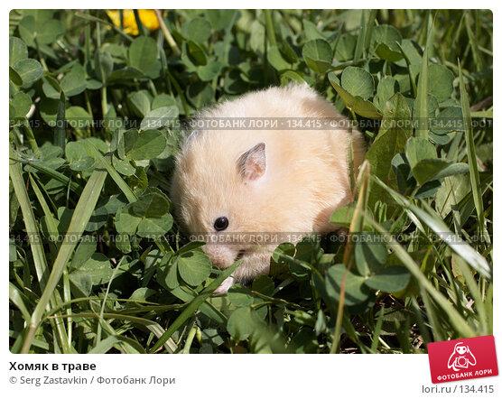 Хомяк в траве, фото № 134415, снято 26 мая 2006 г. (c) Serg Zastavkin / Фотобанк Лори