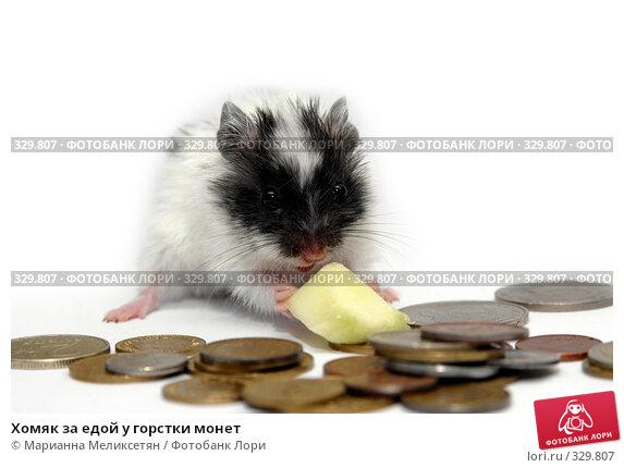 Хомяк за едой у горстки монет, фото № 329807, снято 28 октября 2007 г. (c) Марианна Меликсетян / Фотобанк Лори