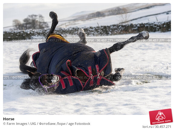 Horse. Стоковое фото, фотограф Farm Images \ UIG / age Fotostock / Фотобанк Лори