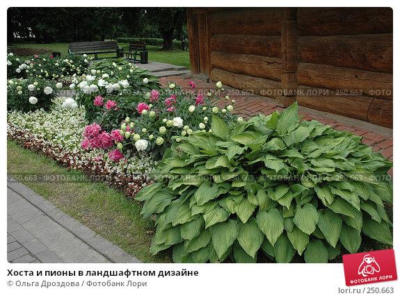 Хоста и пионы в ландшафтном дизайне, фото № 250663, снято 30 июня 2006 г. (c) Ольга Дроздова / Фотобанк Лори