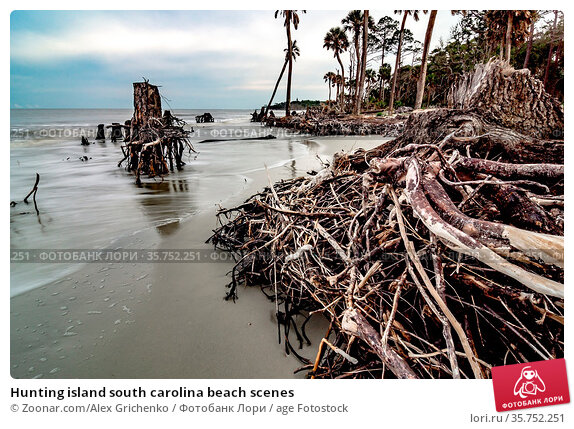 Hunting island south carolina beach scenes. Стоковое фото, фотограф Zoonar.com/Alex Grichenko / age Fotostock / Фотобанк Лори