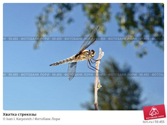 Хватка стрекозы, фото № 59455, снято 3 июля 2007 г. (c) Ivan I. Karpovich / Фотобанк Лори