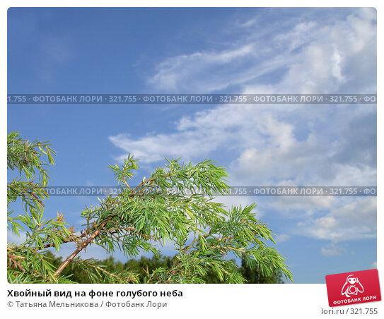 Хвойный вид на фоне голубого неба, фото № 321755, снято 13 июня 2008 г. (c) Татьяна Мельникова / Фотобанк Лори