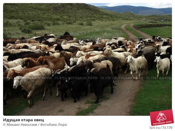 Купить «Идущая отара овец», фото № 73179, снято 4 августа 2007 г. (c) Михаил Николаев / Фотобанк Лори