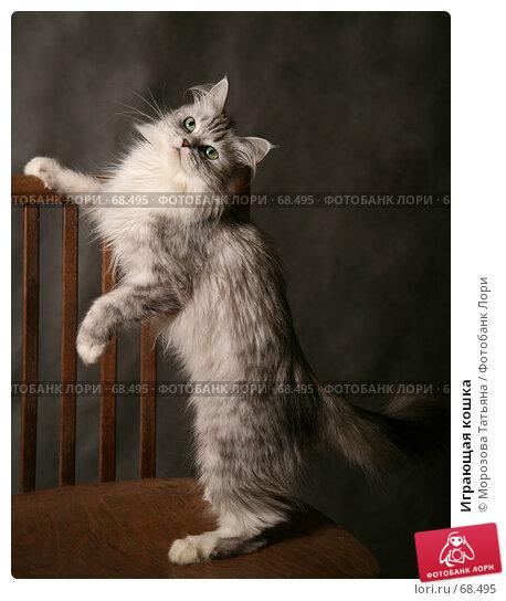 Играющая кошка, фото № 68495, снято 21 июля 2007 г. (c) Морозова Татьяна / Фотобанк Лори