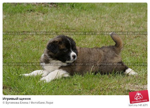 Игривый щенок, фото № 41671, снято 6 мая 2007 г. (c) Бутинова Елена / Фотобанк Лори