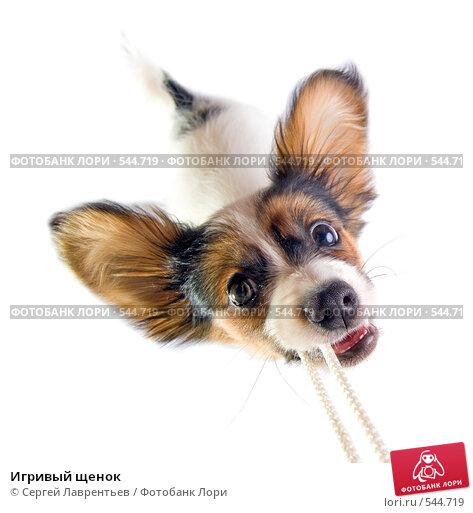 Купить «Игривый щенок», фото № 544719, снято 5 ноября 2008 г. (c) Сергей Лаврентьев / Фотобанк Лори