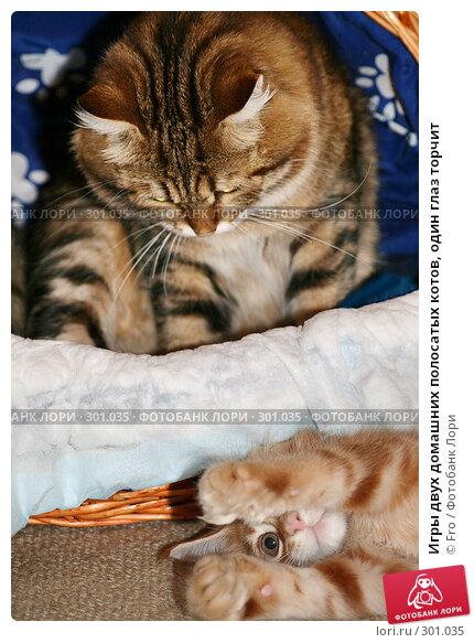 Игры двух домашних полосатых котов, один глаз торчит, фото № 301035, снято 15 сентября 2007 г. (c) Fro / Фотобанк Лори