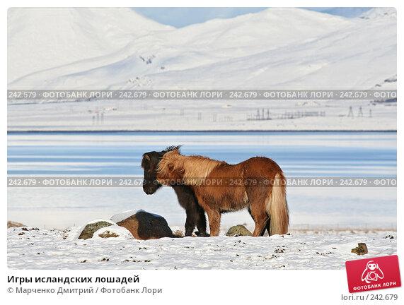 Игры исландских лошадей, фото № 242679, снято 8 марта 2008 г. (c) Марченко Дмитрий / Фотобанк Лори