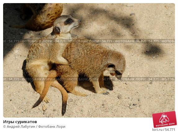 Купить «Игры сурикатов», фото № 54771, снято 20 мая 2007 г. (c) Андрей Лабутин / Фотобанк Лори