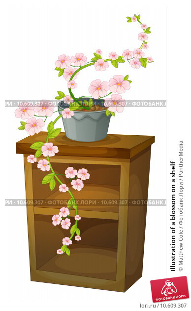Illustration of a blossom on a shelf. Стоковая иллюстрация, иллюстратор Matthew Cole / PantherMedia / Фотобанк Лори