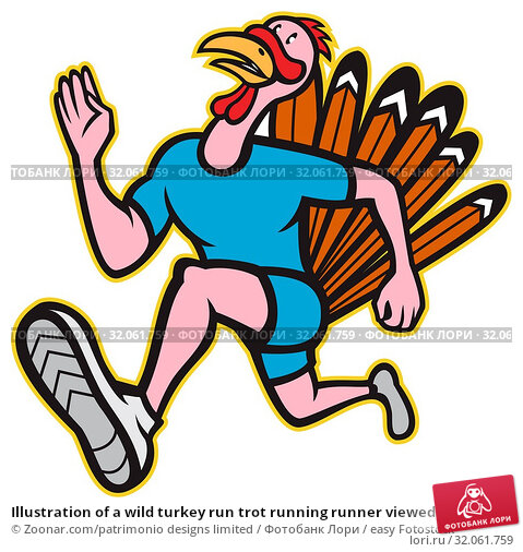 Illustration of a wild turkey run trot running runner viewed from side done in cartoon style on isolated white background. Стоковое фото, фотограф Zoonar.com/patrimonio designs limited / easy Fotostock / Фотобанк Лори