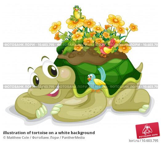 illustration of tortoise on a white background. Стоковая иллюстрация, иллюстратор Matthew Cole / PantherMedia / Фотобанк Лори