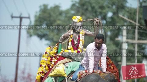 Indian sadhus coming to Kumbh Mela, Royal welcome. Ash covered Sadhus sitting in Horse, Camel wearing garland, Slowmotion Appleprores 422 Cinetone. Редакционное видео, видеограф Devendra Rawat / Фотобанк Лори