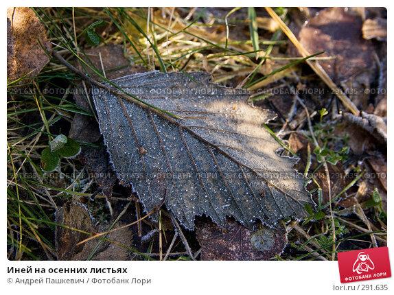 Иней на осенних листьях, фото № 291635, снято 25 апреля 2017 г. (c) Андрей Пашкевич / Фотобанк Лори