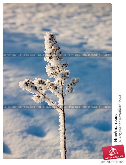 Иней на траве, фото № 114183, снято 28 декабря 2004 г. (c) Argument / Фотобанк Лори