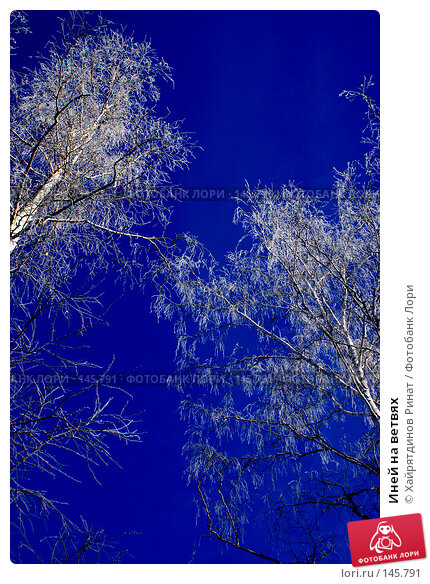 Иней на ветвях, фото № 145791, снято 8 декабря 2007 г. (c) Хайрятдинов Ринат / Фотобанк Лори