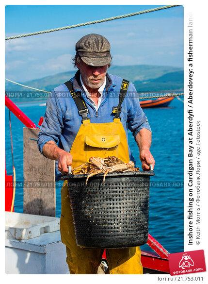 Купить «Inshore fishing on Cardigan Bay at Aberdyfi / Aberdovey: a fisherman landing his catch of spider crabs , Wales UK.», фото № 21753011, снято 22 марта 2019 г. (c) age Fotostock / Фотобанк Лори