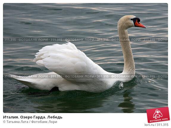 Италия. Озеро Гарда. Лебедь, фото № 311315, снято 1 мая 2008 г. (c) Татьяна Лата / Фотобанк Лори